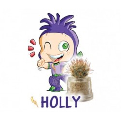 Holly - Successo