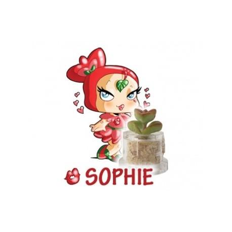 Sophie - Passione
